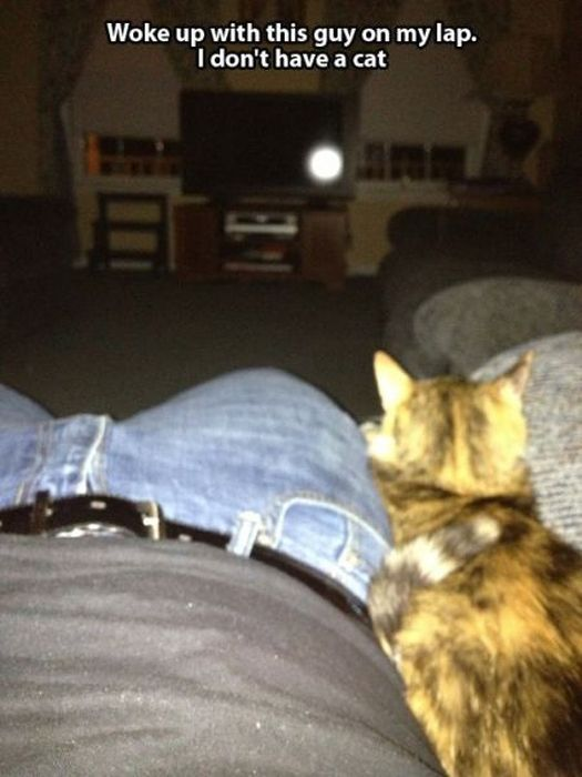 These Cats Give New Meaning To The Words Cat Burglar (24 pics)
