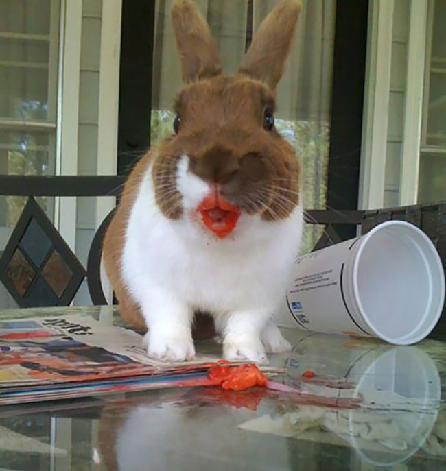 Animals Eating Berries Looks Funny And Disturbing (11 pics)