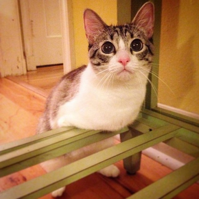 Cat With Missing Paws Is Now A Star On Instagram (13 pics)