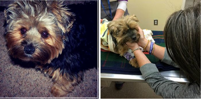 First And Last Pictures Of People's Pets That Will Hit You Right In The Feels (24 pics)