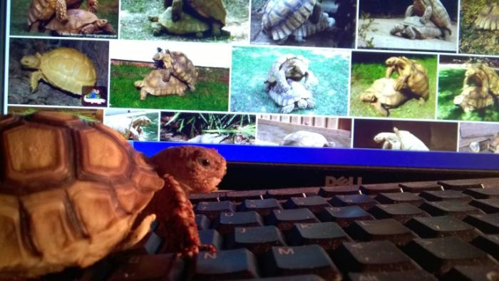 Girlfriend's Pet Tortoise Parties Hard While She's Away (3 pics)