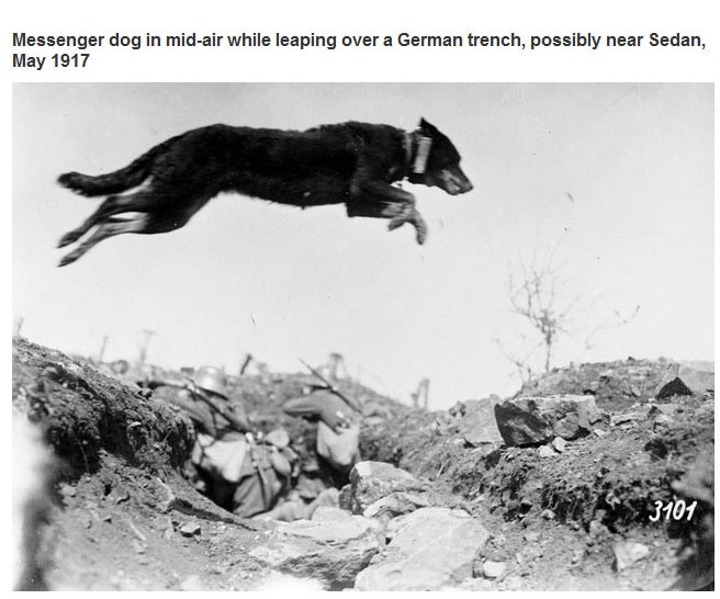 Photos That Captured Amazing Moments In History (22 pics)
