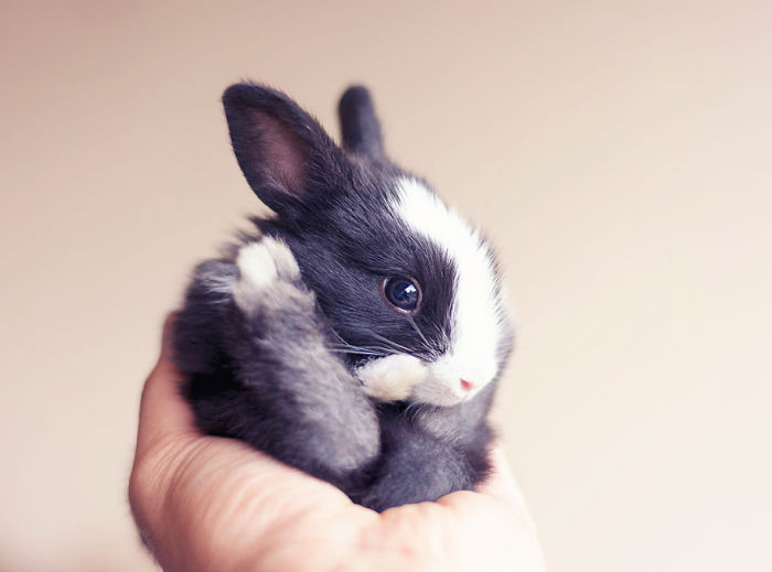 See How Much These Baby Bunnies Grew In 30 Days (16 pics)