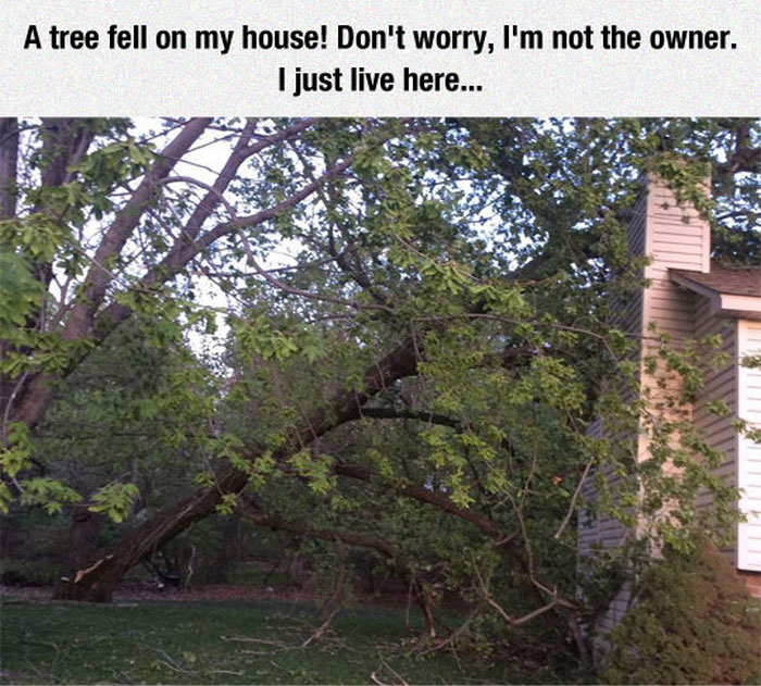 When A Tree Came Crashing Through The House They Found A Solution (5 pics)
