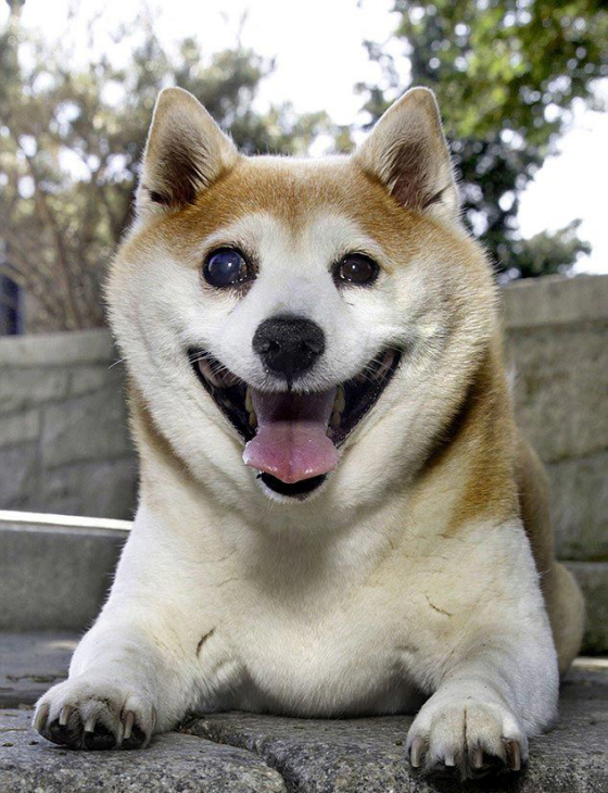 Cinnamon Is The World's Happiest Dog, She's Always Smiling (9 pics)