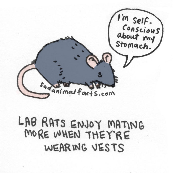 Sad Animal Facts Are Actually Kind Of Adorable (54 pics)