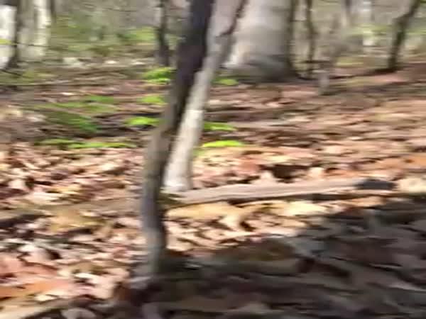 Bobcat Attacks Hunter