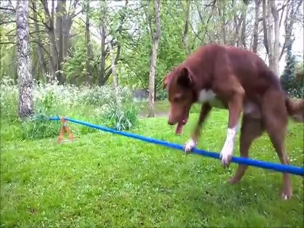 Acrobatic Dog