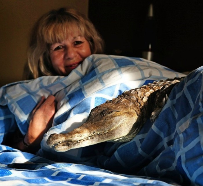 Meet The Woman Who Keeps A Crocodile As A Pet (4 pics)