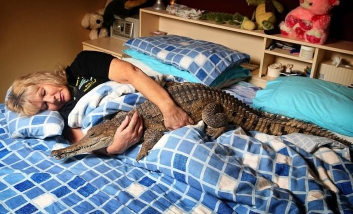 Meet The Woman Who Keeps A Crocodile As A Pet (4 pics)