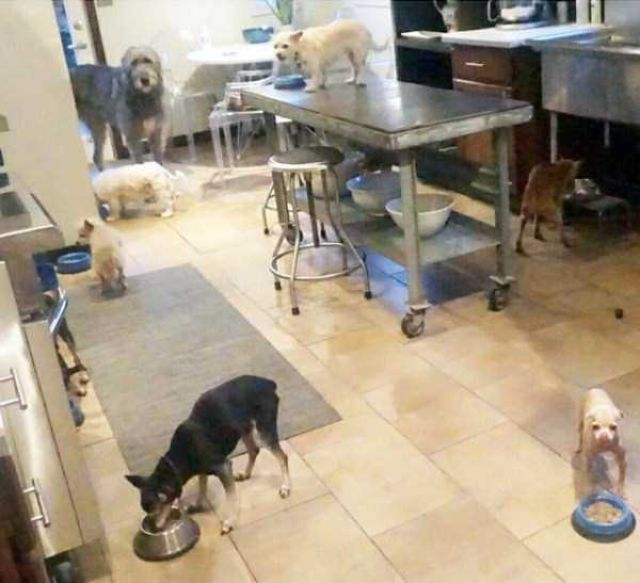 Meet The Man That Turned His House Into An Animal Shelter (30 pics)