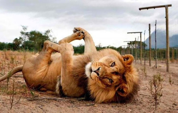 Animals That Absolutely Love Posing For The Camera (42 pics)