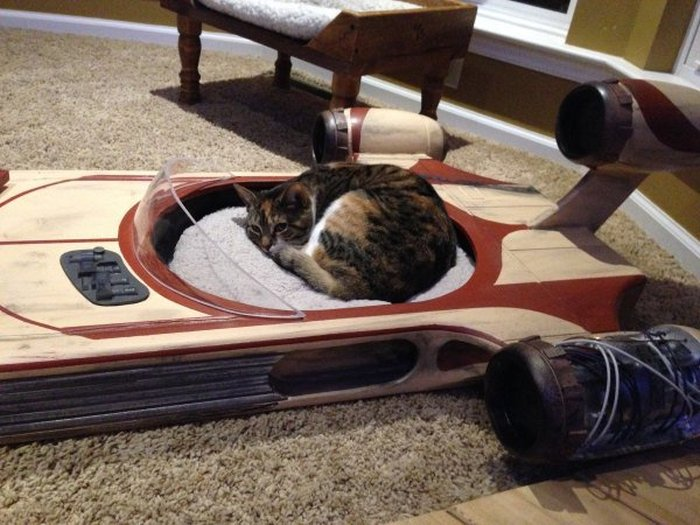A Tribute To The World's Best Pet Owners (20 pics)