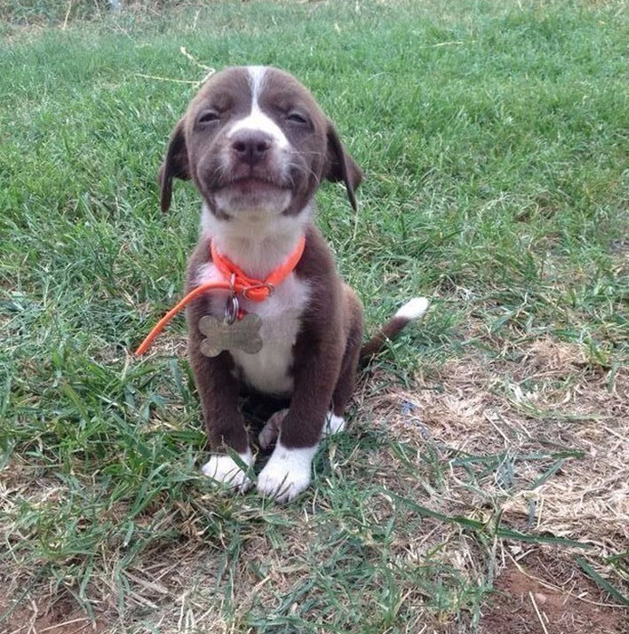 Puppies That Love Posing For The Camera (99 pics)