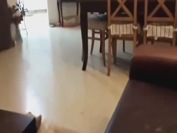 Stupid Dogs