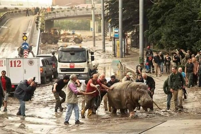 Animals Escape Tbilisi Zoo After The Flood (15 pics)