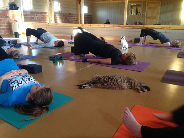 Animal Shelter Sends Cats To Yoga Class To Help Them Find Homes (7 pics)