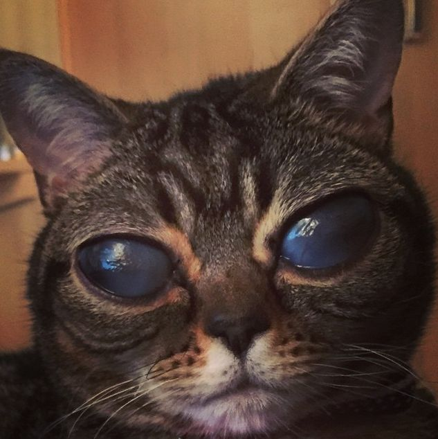 Is This Cat Actually An Alien? (15 pics)