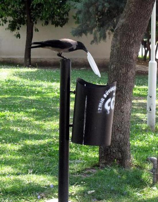 If More People Were Like This Crow The World Would Be A Cleaner Place (5 pics)