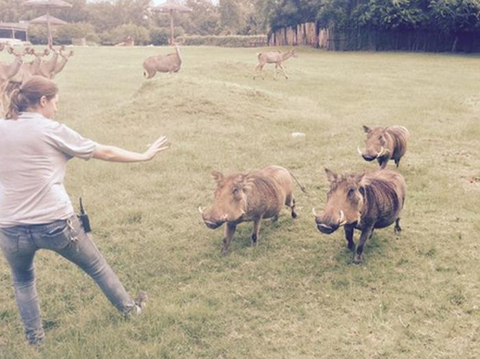 """Zoo Staff Are Re-Creating """"Jurassic World"""" With Their Animals  (20 pics)"""