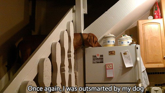 Pictures That Only Dog Lovers Will Truly Appreciate (41 pics)