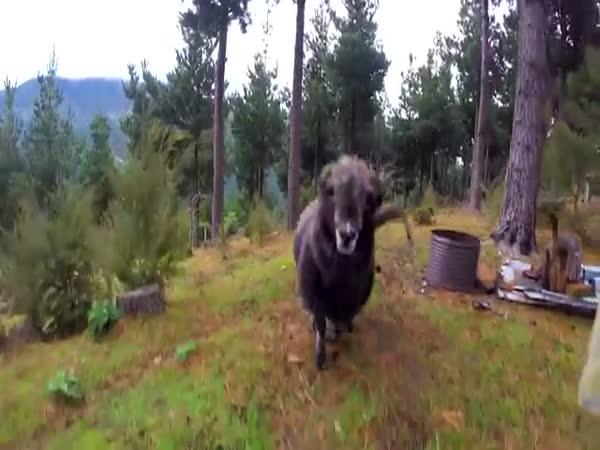 Ram Attacks A Drone