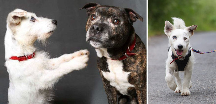 Adorable Blind Dog And His Seeing-Eye Guide Dog  Are Looking For A Forever Home (5 pics)