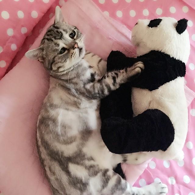 The Saddest Cat On The Internet (14 pics)