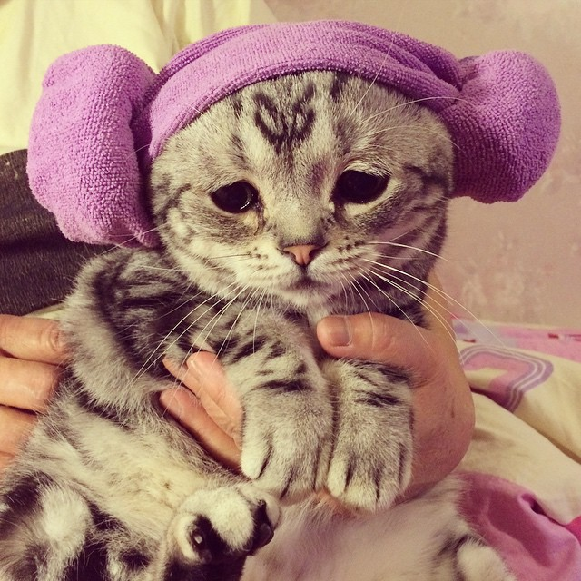 The Saddest Cat On The Internet (14 pics)