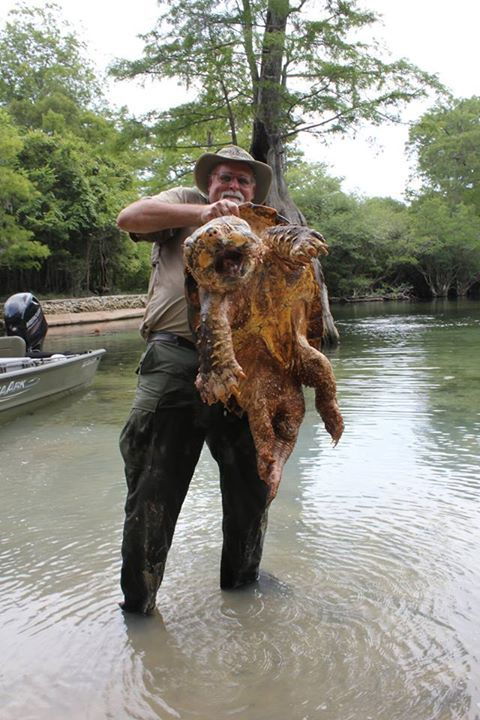 You Have To See This Gigantic 125 Pound Alligator Snapping Turtle (2 pics)