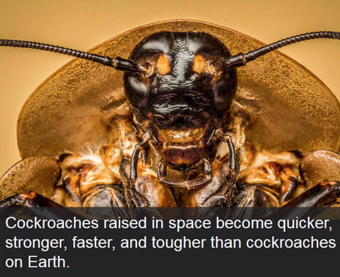 Time To Sit Back And Teach Yourself These Fun Facts (19 pics)