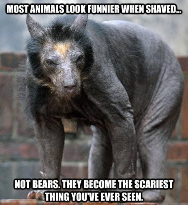 Terrifying Facts About Animals That Will Make You Fear Wildlife (10 pics)