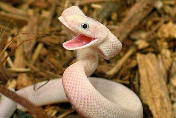 Even Deadly Animals Like To Look Cute Sometimes (25 pics)