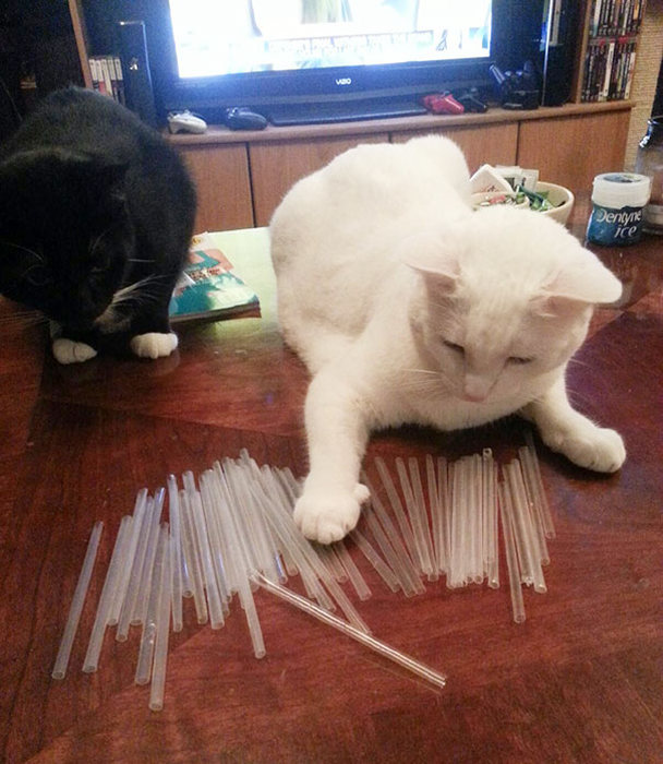 Hoarder Cats That Need A Serious Intervention (21 pics)