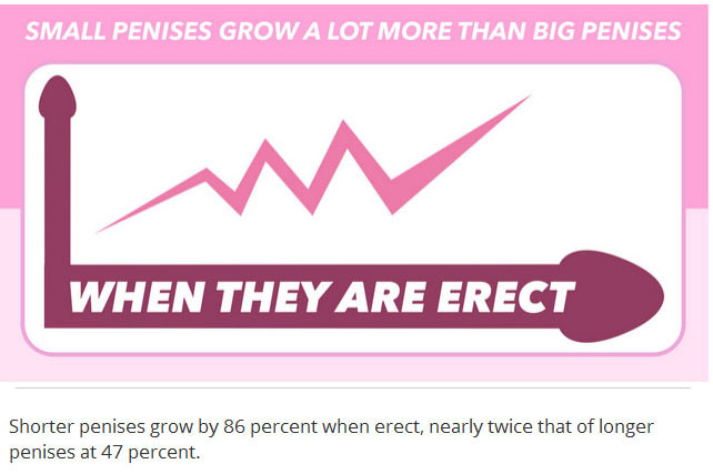 12 Things Every Person Needs To Know About Penises (12 pics)