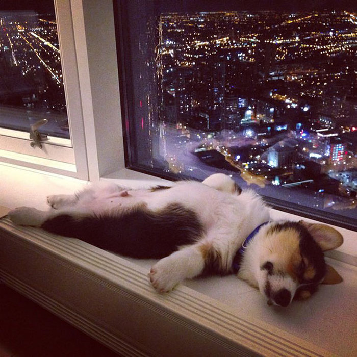 Proof That Puppies Can Sleep Absolutely Anywhere (37 pics)