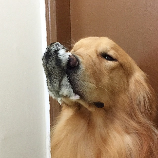 Meet The Dog That's Best Friends With 8 Birds And A Hamster (23 pics)