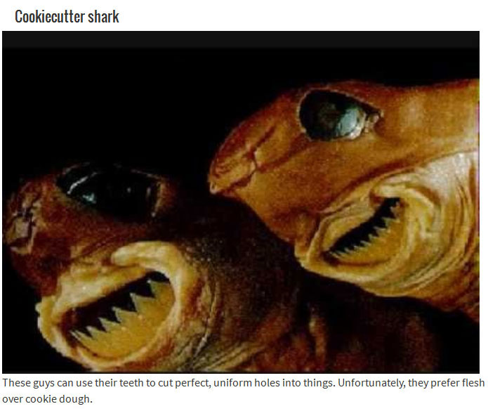10 Animals With Mouths That Will Haunt Your Dreams (10 pics)