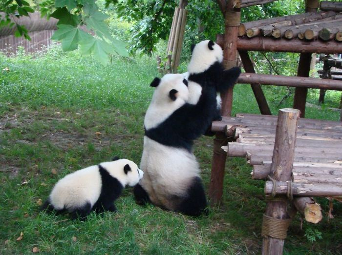 Panda Daycare Is The Cutest Daycare On The Planet (18 pics)