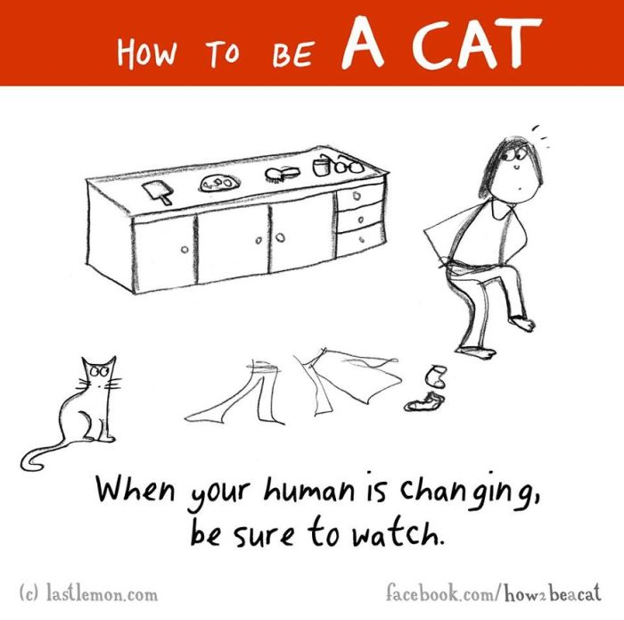 Everything You Need To Know About How To Be A Cat (25 pics)