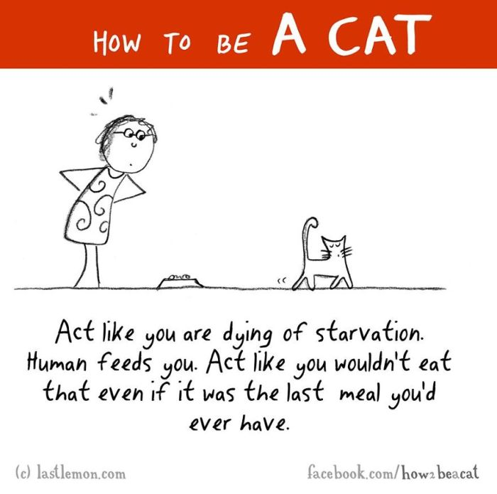 Everything You Need To Know About How To Be A Cat (25 Pics