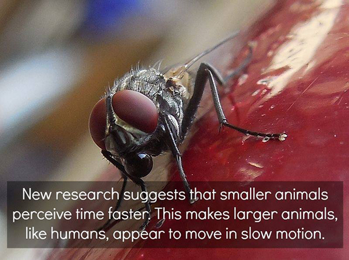 Awesome And Interesting Facts About Science That You Need To Know (23 pics)
