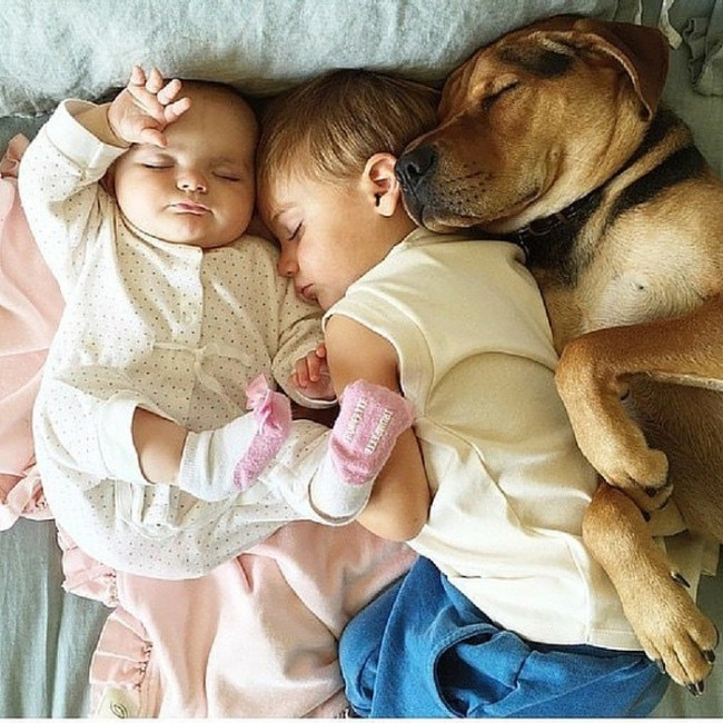 Dogs Are The Greatest Source Of Unconditional Love (27 pics)