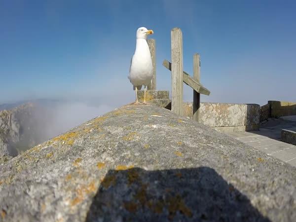 Gull Stealing Camera