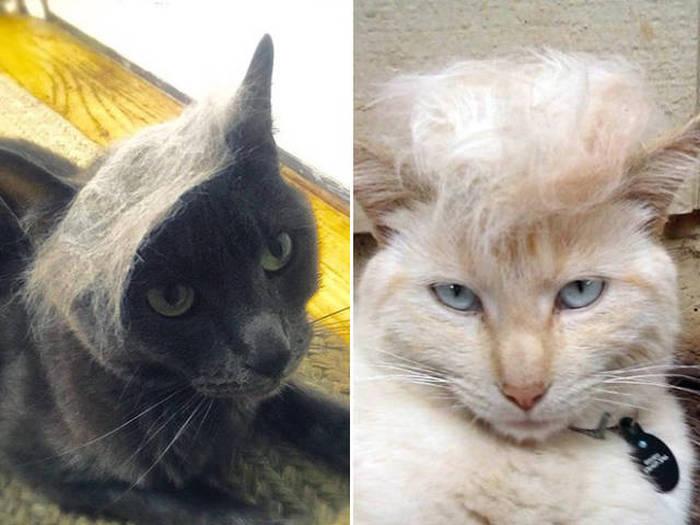 #TrumpYourCat: These cats look a lot like Donald Trump