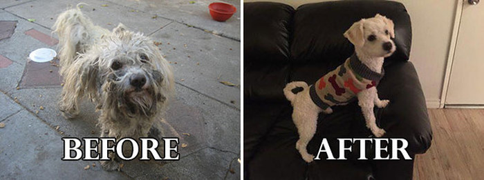 20 Unbelievable Before And After Shelter Dog Makeover Photos (20 pics)