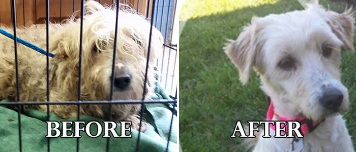 Mira estos perros antes y después de ser rescatados