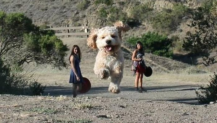 These Pictures Make Normal Sized Dogs Look Like Giants (17 pics)
