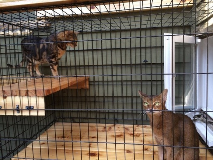 They Found The Perfect Way To Let Their Indoor Cats Play Outside (8 pics)