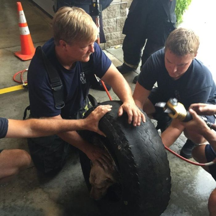 Firefighters Rescue Dog That Got Its Head Stuck In A Wheel (20 pics)